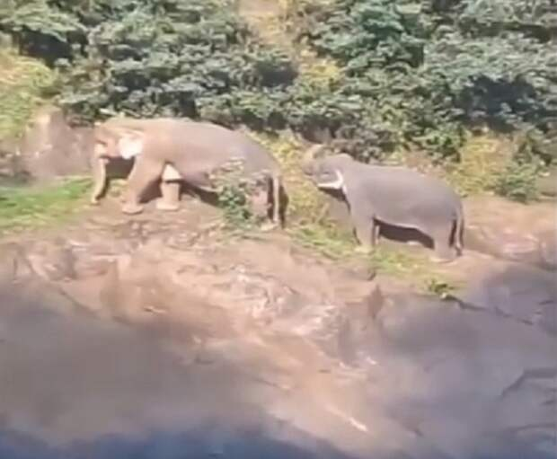 Слоны погибли в водопаде, пытаясь спасти друг друга