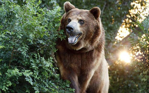 Медведь в лесу разгромил Ниву охотников
