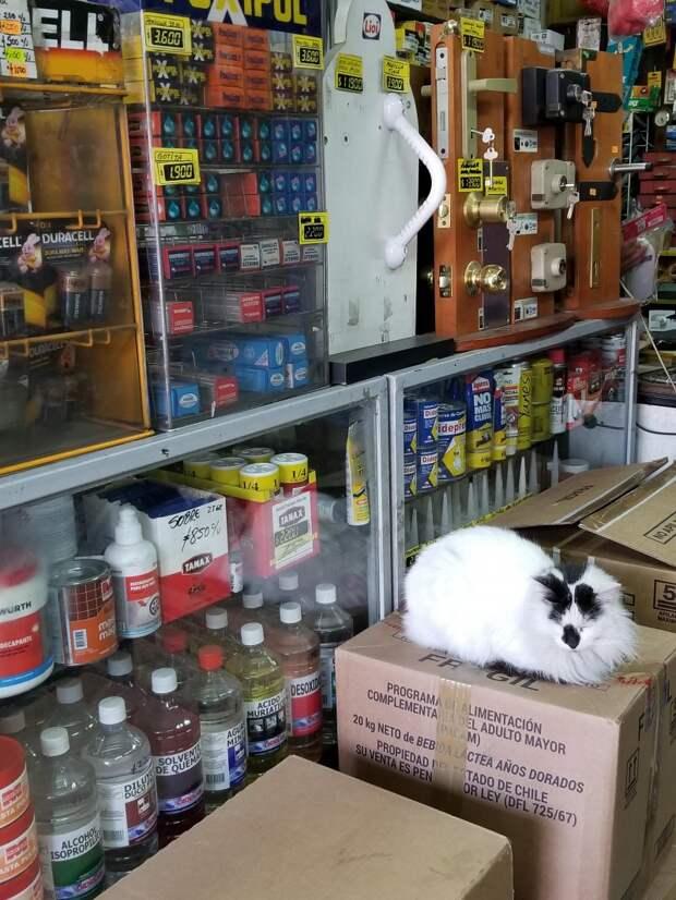 20 забавных котов-работяг, которые с нетерпением ждали вечер пятницы