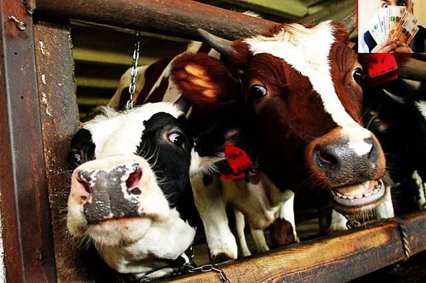 Комбикорм для народа: почему нас кормят поганым мясом и омерзительной колбасой