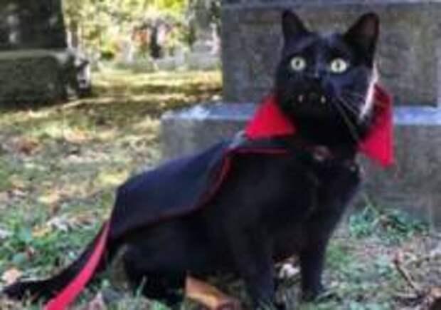 Кот с вампирскими клыками стал звездой сети