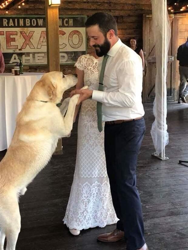 пес дает лапу хозяину