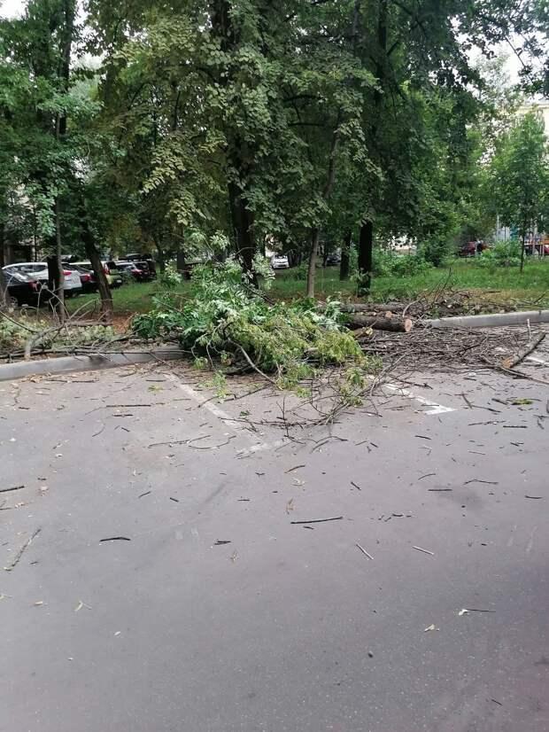 Распиленные остатки дерева с Академика Комарова вывезут — «Жилищник»