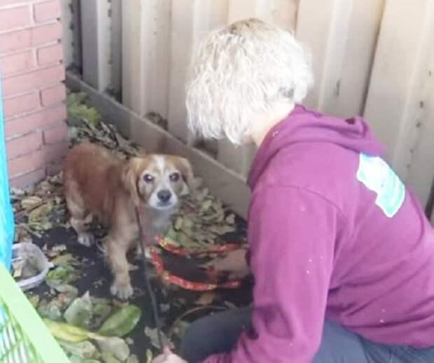 Брошенный пес прятался между постройками. Его грустные глаза смотрели на волонтеров, выражая страх и недоверие