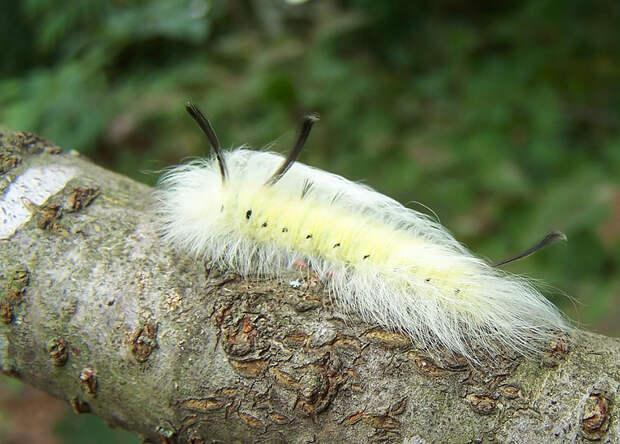 caterpillar-moth-butterfly-before-after-metamorphosis-15-1