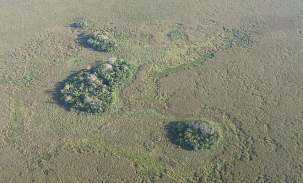 Лес посреди амазонки
