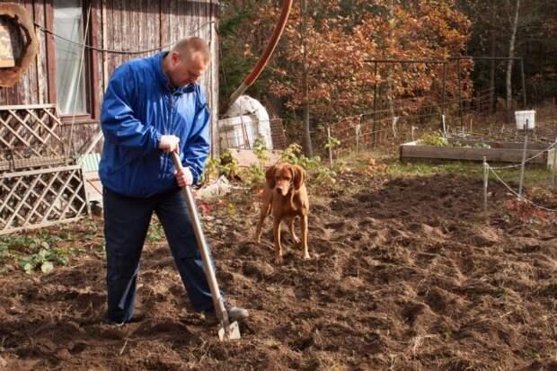 Нужно ли перекапывать землю осенью