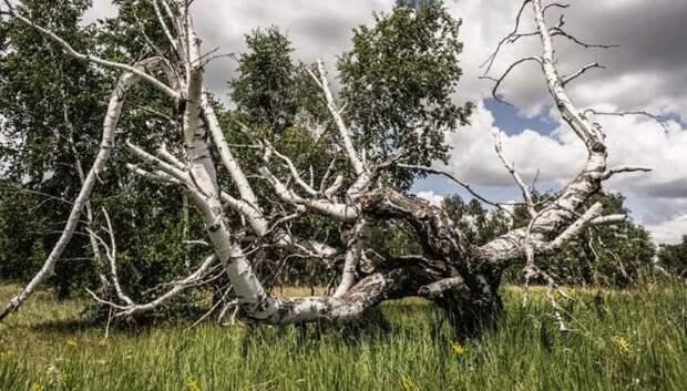 Странным в этом месте можно назвать все, даже деревья. /Фото: ufonews.su