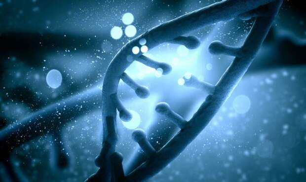 Факты о генетике