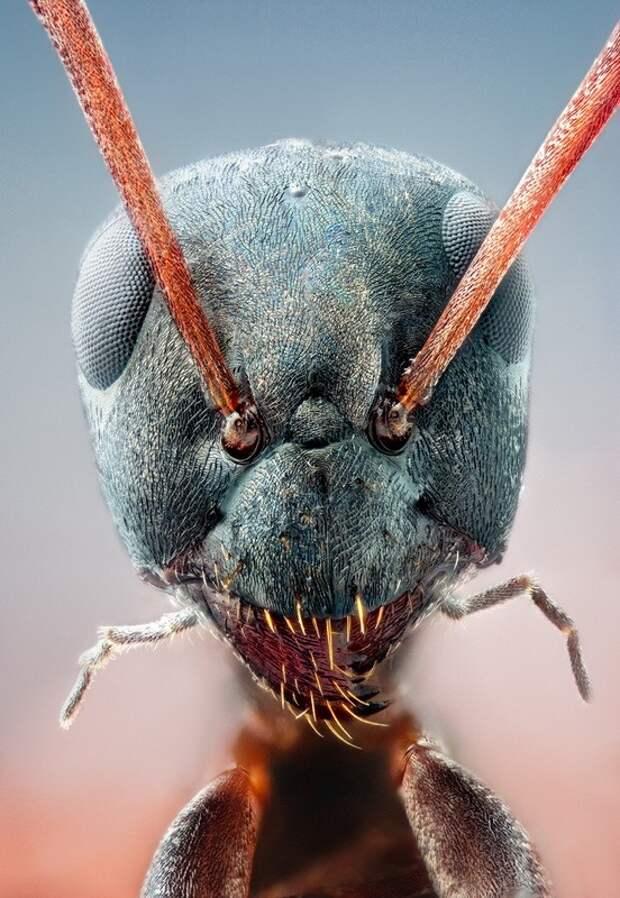 insects18 Портреты насекомых