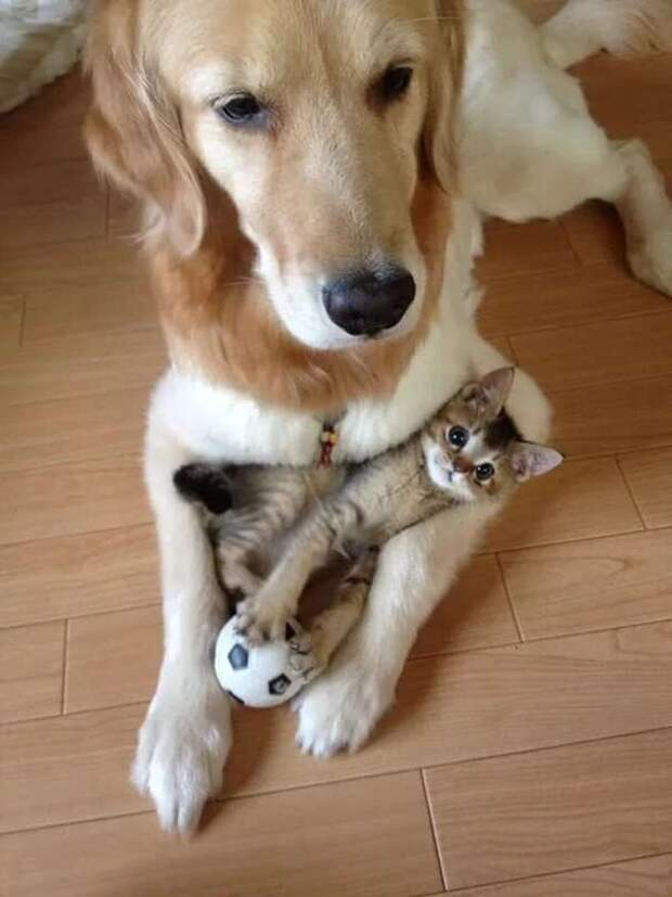 Прикольные фотографии котиков. Кити кити юмор. Подборка milayaya-cat-milayaya-cat-33220320102020-2 картинка milayaya-cat-33220320102020-2