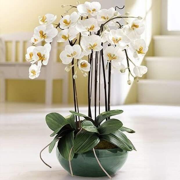 Благоприятные цветы для дома по фэн-шуй