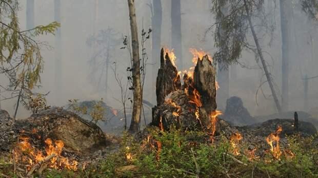 Под Судаком потушили крупный лесной пожар
