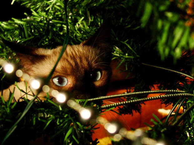 3166706_Christmas_Cat_by_TheBigIdeaRo (700x525, 106Kb)