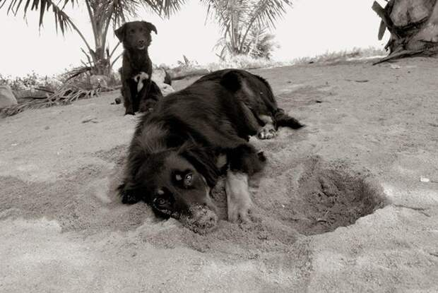 Необычные фото бездомных собак