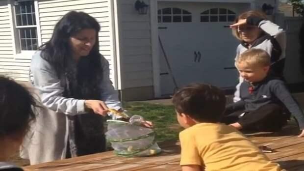 Мама на глазах у детей решила выпустить на волю бабочку, но жизнь насекомого оказалась очень коротка