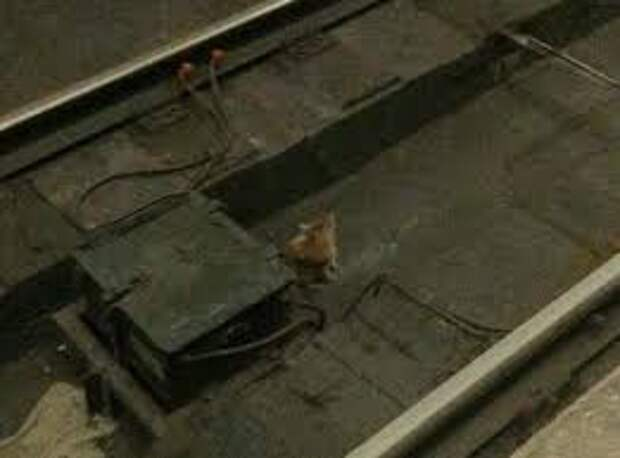 Чтобы спасти крошечного котенка, мужчина прыгнул на рельсы в метро