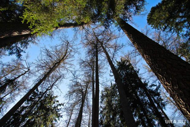 ВХМАО обнаружено опасное насекомое, способное уничтожить лес