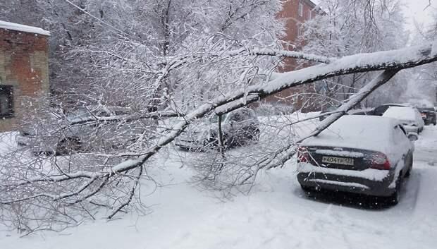 Дерево упало на дорогу в микрорайоне Климовск