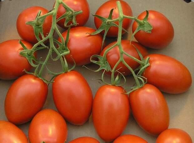Рио гранде — необычные помидоры, родом из Голландии