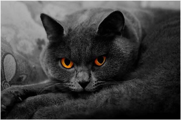 Хозяева опасались, что породистый британец будет обижать кота-подобрашку, но они построили бесклассовое общество