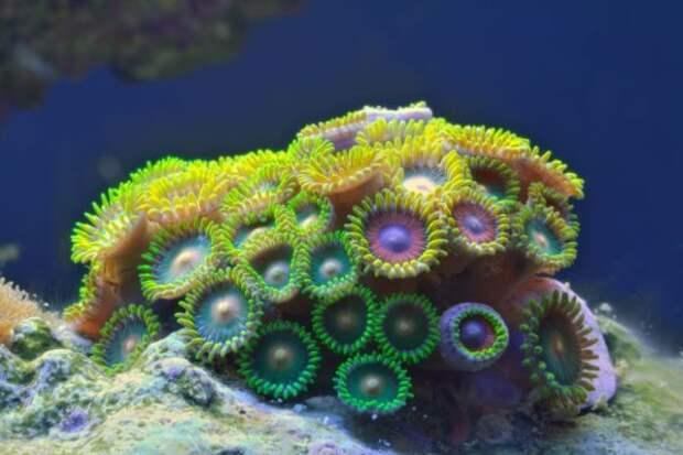 Что представляют из себя кораллы, они живые или растения