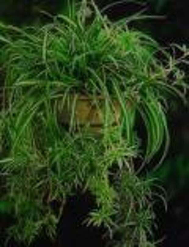 Растения, которые увлажняют воздух