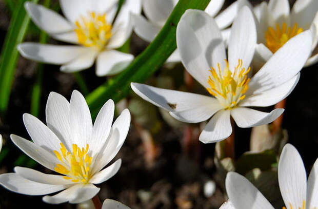 Красивые цветочки, которые могут обеспечить человеку мучительную смерть