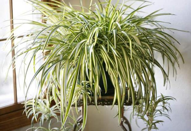 10 природных очистителей воздуха, которые нужны в каждой квартире