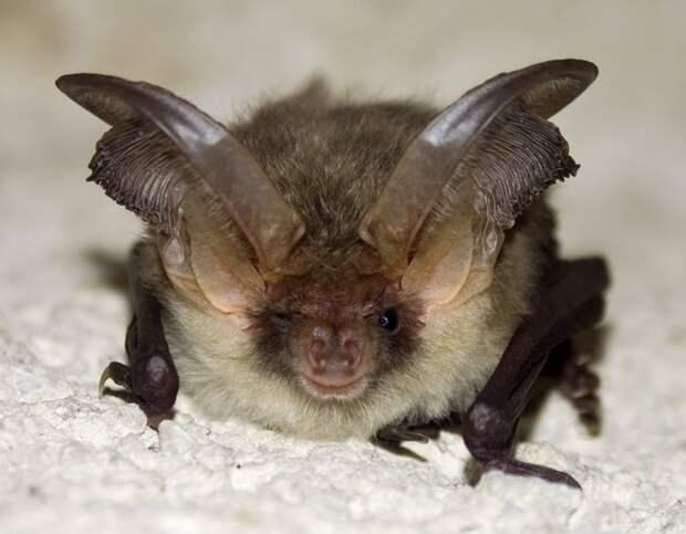 ugliest04 11 претендентов на звание самого уродливого животного на планете