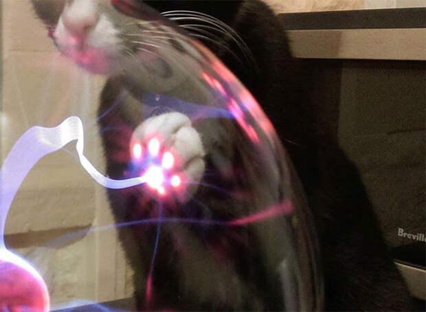 кошка и плазма-шар