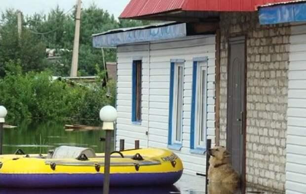 Пес Дружок, стоя по шею в воде, охранял жилище хозяев