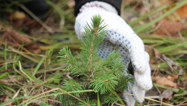 В подмосковных лесах началась приемка культур, посаженных в рамках акции «Наш лес»