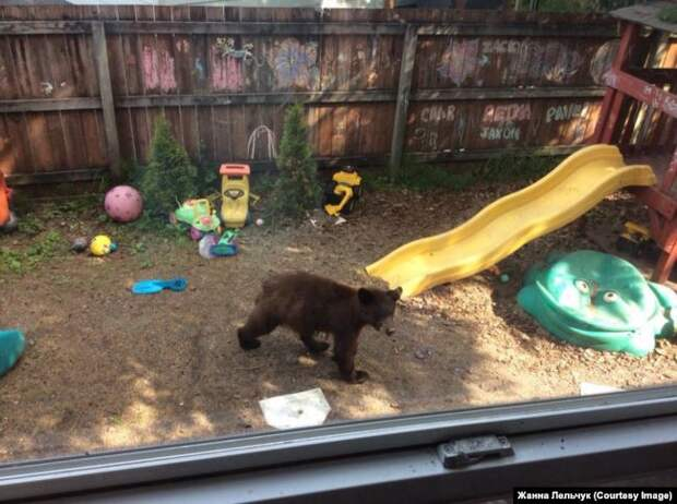 """""""Сами виноваты"""": почему медведи выходят к людям"""