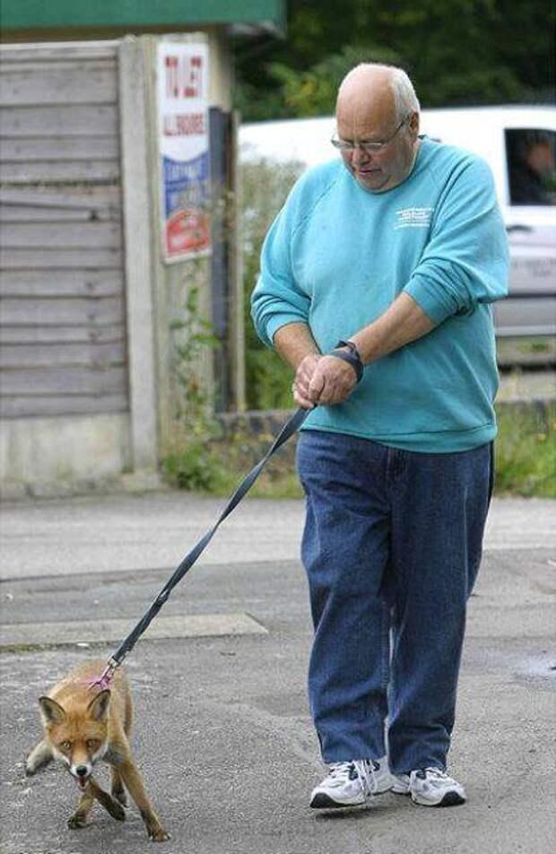 strange pet walking09