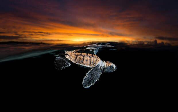 27 редких морских фото, где фотограф поймал удивительный момент