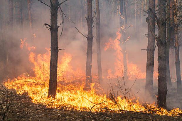 Орегон охватили сильнейшие пожары в истории штата