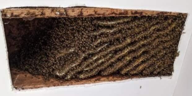 Мужчина больше года жил в доме со 100 тысячами пчел