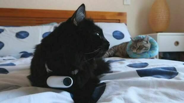 Мужчина прикрепил камеру к ошейнику своего кота, чтобы посмотреть, чем тот занимается