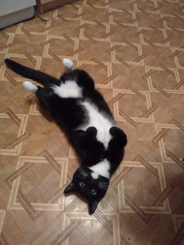 черно-белый кот на полу