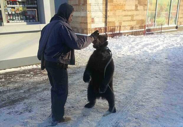 Mucky куб: Роберт Бирюков вместе со своим питомцем медвежонком, который сделал свой бизнес на московской улице бешенство владельца соседнего газетный киоск