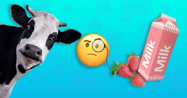 Будет ли молоко клубничным, если кормить корову клубникой?
