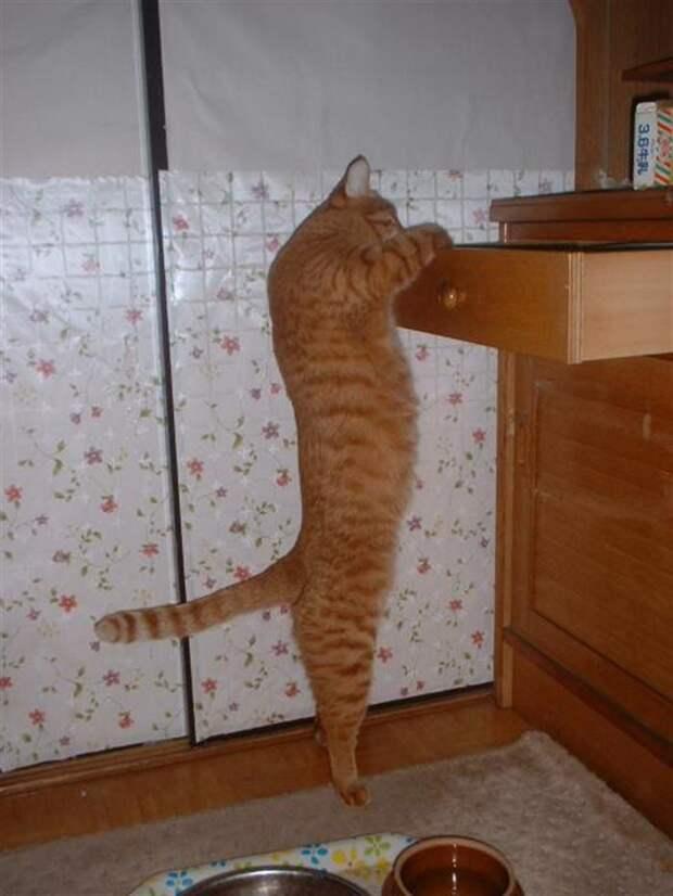 10 примеров того, как выглядит настоящее кошачье любопытство