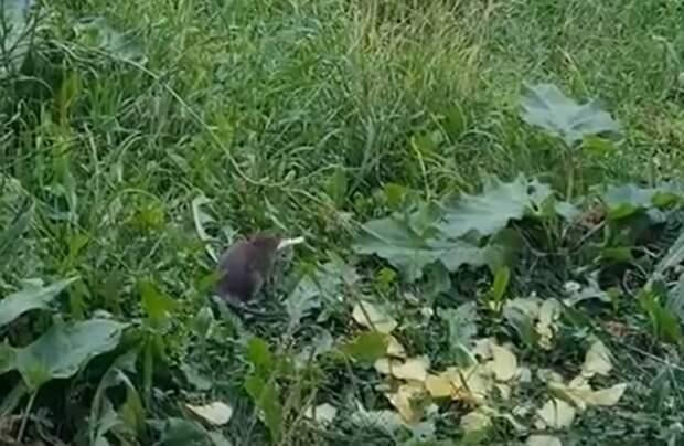 Крысы «оккупировали» территорию парка «Яуза»