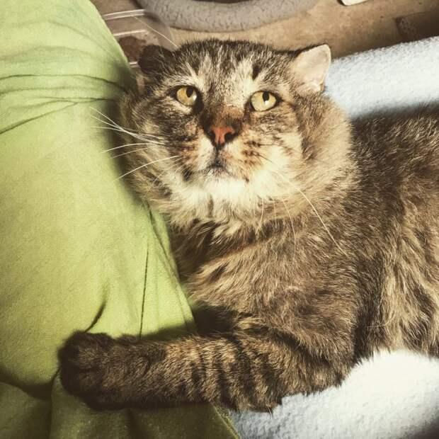 «Не покидай меня!» Она гладила неприступного кота-манула, и он таял на её глазах…