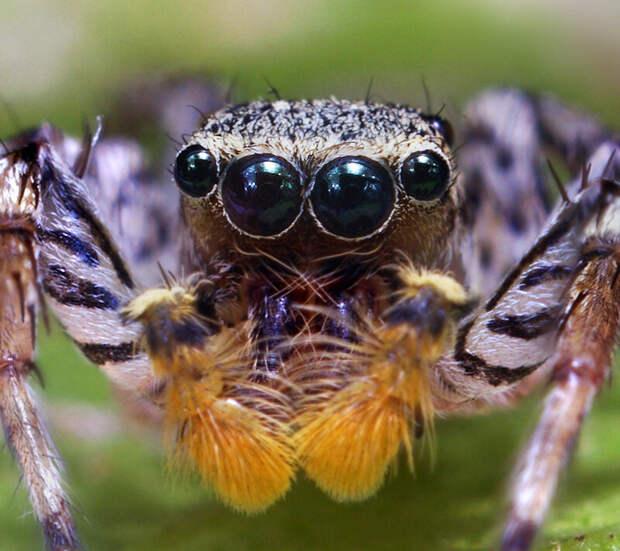Когда пауки танцуют?