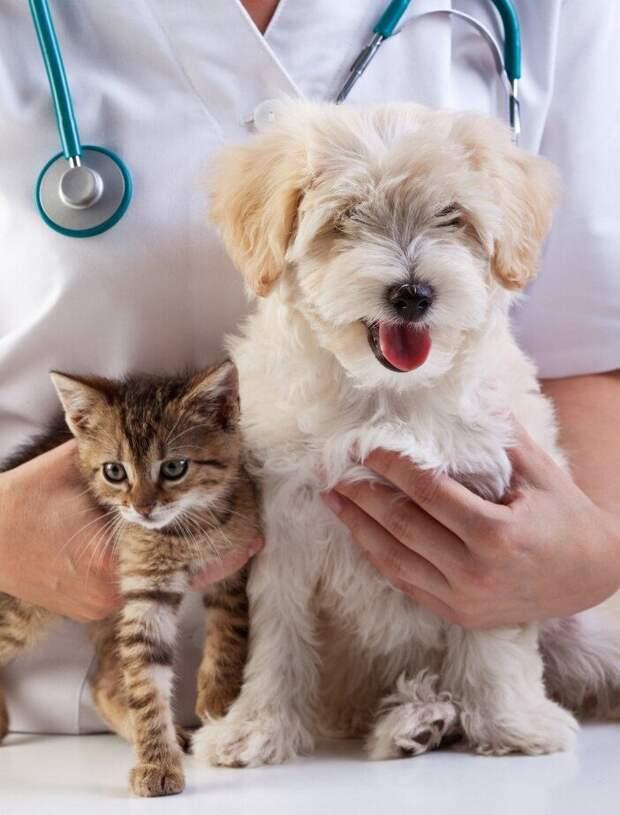 Записки ветеринара: неожиданные случаи на приёме