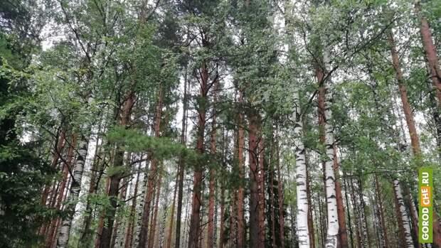 В Вологодской области локализованы все действующие лесные пожары