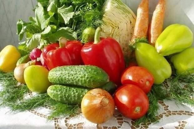 Стоит ли прививать овощи?