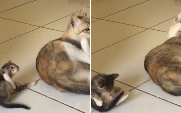 Хороший учитель: кошка показала котенку, как правильно ухаживать за собой
